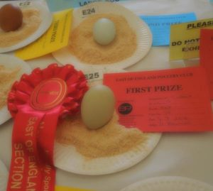 2016wragby-best-eggs